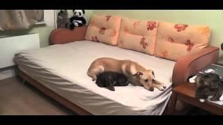 №02 Что делают собаки одни дома