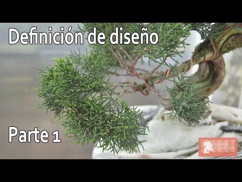 Qu plantas he tra do de lanzarote plantado funnycat tv for Definicion de vivero