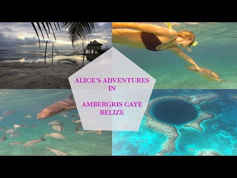 WOW AIR TRAVEL GUIDE APPLICATION + AMBERGRIS CAYE BELIZE