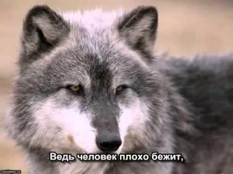 В.Медяник. МЫ - ВОЛКИ
