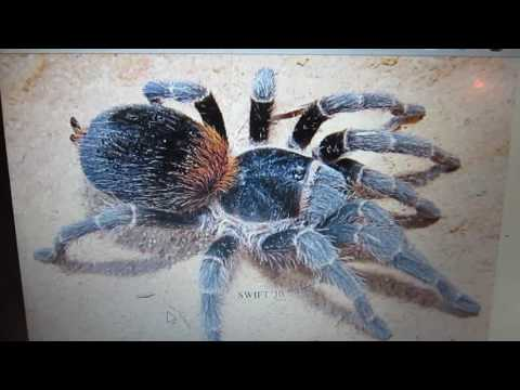 New Spiders And Molts!