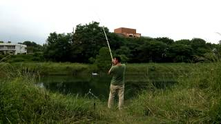 Japan carp fishing(津保川の鯉釣り2)