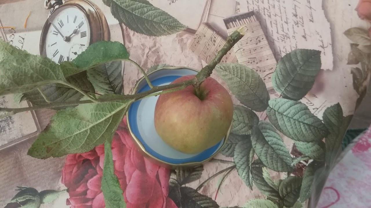 Яблоки. Лечебные свойства. Лучшие рецепты.