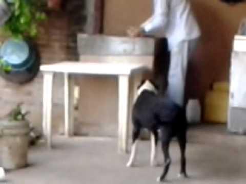Video-2011-12-25-16-53-42.mp4