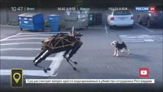 Настоящий пёс против пса-робота