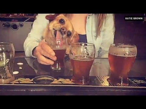 Pet-friendly microbrewery policy cut off by Alberta Health Services