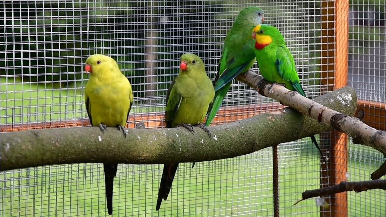 Papouškárna - slavnostní otevření 2020