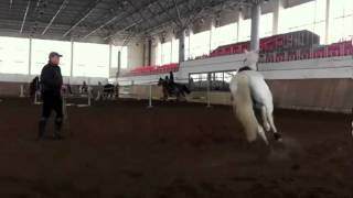 White Horse for Sale