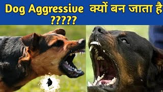 Why My Dog Aggressive ??