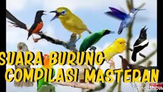 KOMPILASI MASTERAN SUARA 13 BURUNG terlengkap untuk usia PAUD