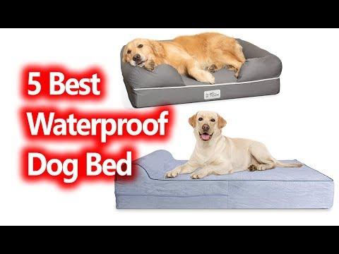 best-waterproof-dog-bed-buy-in-2019