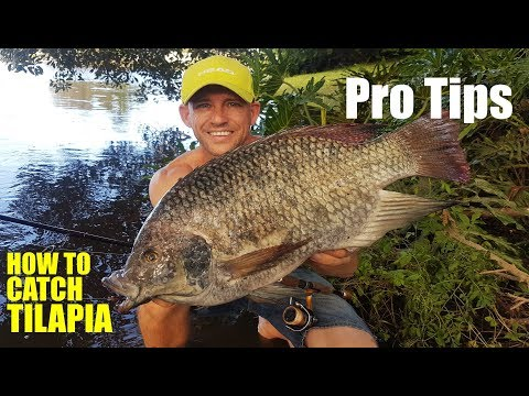 WILD TILAPIA Fishing PRO TIPS | CoastfishTV TackleChat S02E11