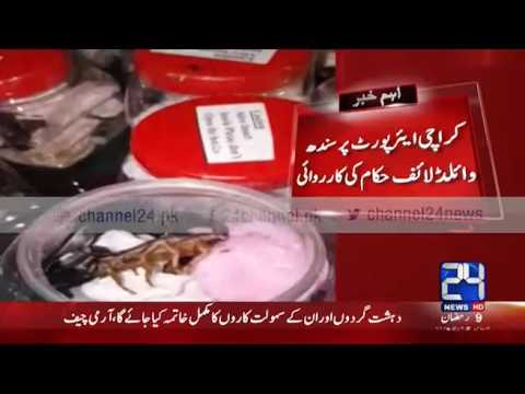 24 Breaking : Sindh Wildlife department recovers million worth smuggled scorpion
