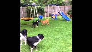 Playing With Friends, Dog Training St. Cloud Mn, Dog Training Brainerd Mn