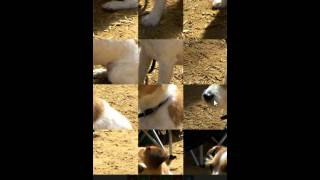 Угадай животное - Уровень 1