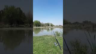 Наблюдаю За Лошадями На Рыбалке Приколы Fishing PRO Темур Тик Ток Shorts