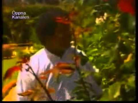 Kiros Alemayehu