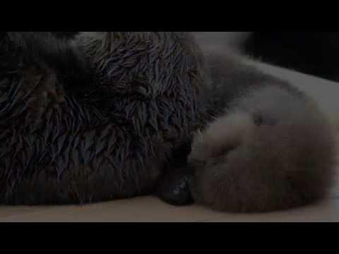 Southern Sea Otter Pup