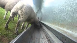 Advantage Feeders Lamb Creep Panel