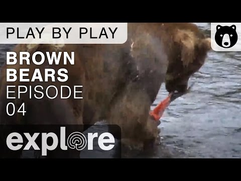 Brown Bear Play By Play - Ranger Mike Fitz - Katmai National Park - Episode 04