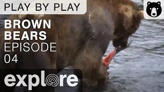 Brown Bear Play By Play - Ranger Mike Fitz - Katmai National Park - Episode 04 thumbnail