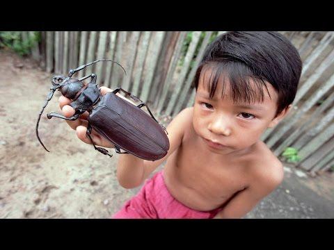 Самые большие жуки на свете