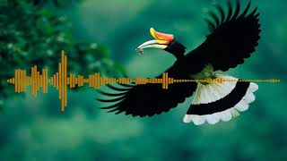 Download Lagu lagu dayak Pupu Tagua mp3