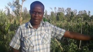 Kithinji Mwenda ,an ex-illicit brew addict to a renown farmer