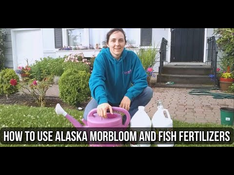 Using Alaska Morbloom & Fish Emulsion