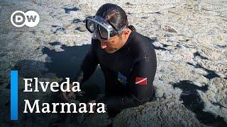 Marmara'da ölüm çoktan başladı | Muhabirimiz dalış yaparak salya tehdidini çekti - DW Türkçe