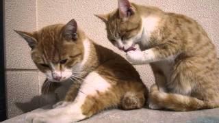タロとジロは兄弟です。兄妹かもしれません。(まだよくわからない) ご...