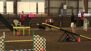 Juno Master Agility Pac Akc 7-4-2013