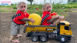 BiBi goes to harvest fruit on the farm