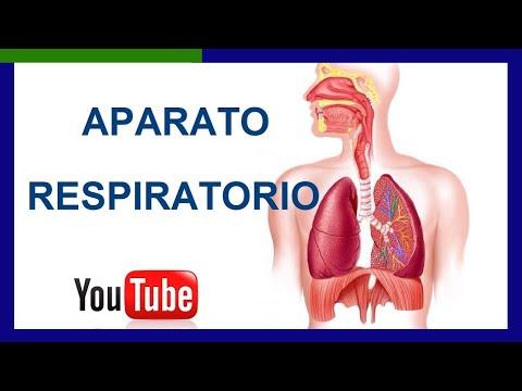 Partes del Aparato Respiratorio y sus Funciones