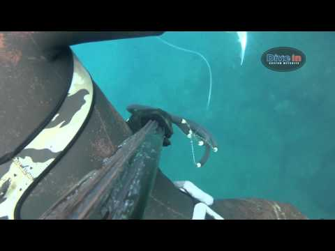 Dive In spearfishing
