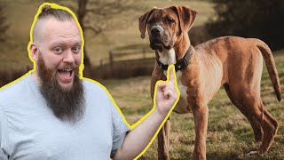 STOP Your Dog Pulling  Training My DOG To Have Perfect Heel