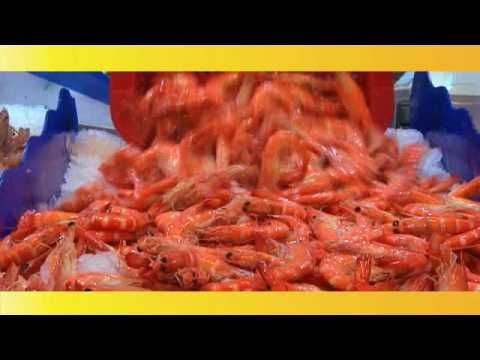 Thailand Export Quality Prawns