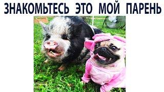Новые Мемы с Собаками. Прикольные Мопсы Подборка Мемов 388
