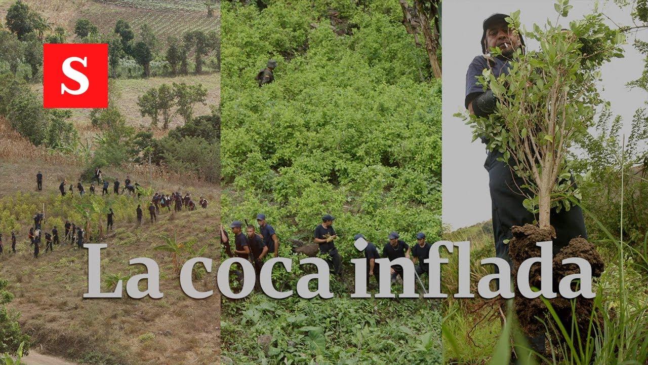 La coca inflada | Semana Video