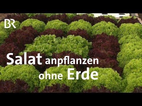 Deep-Water-Kulturen: Schwimmender Salat In Wasser Mit Nährstoffen | Unser Land | BR Fernsehen