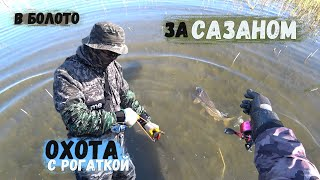 Рыбалка на сазана в болоте, в камышах с рогаткой, много Сазана.