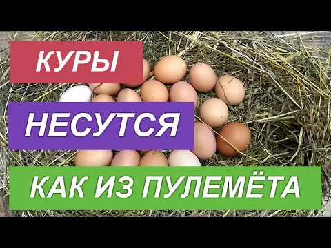 Вопрос: Какую форму имеет яйцо кайры, почему?