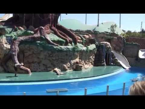 2013 Portugal   Zoo Marine   Seal Show