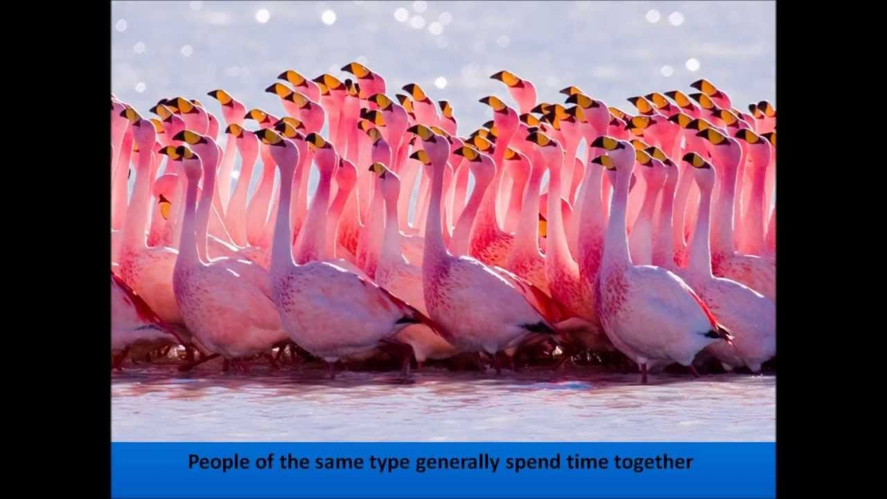 birds of the same feather flock together essay Birds of a feather, flock together it is a very old saying - it does, however, mean that 'birds of (the same) feather flock together' it means that people with the same interests 'move' the same way - just as a flock of (identical species) of bi.