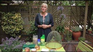 How To: Tackle slugs & snails