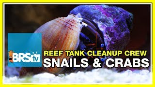 Week 23: Clean-up crew, how many do I need? | 52 Weeks of Reefing