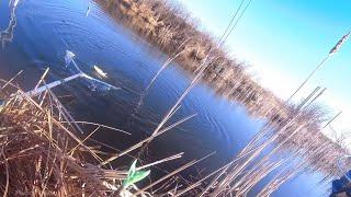 Караси с лопату Рыбалка на поплавок весной