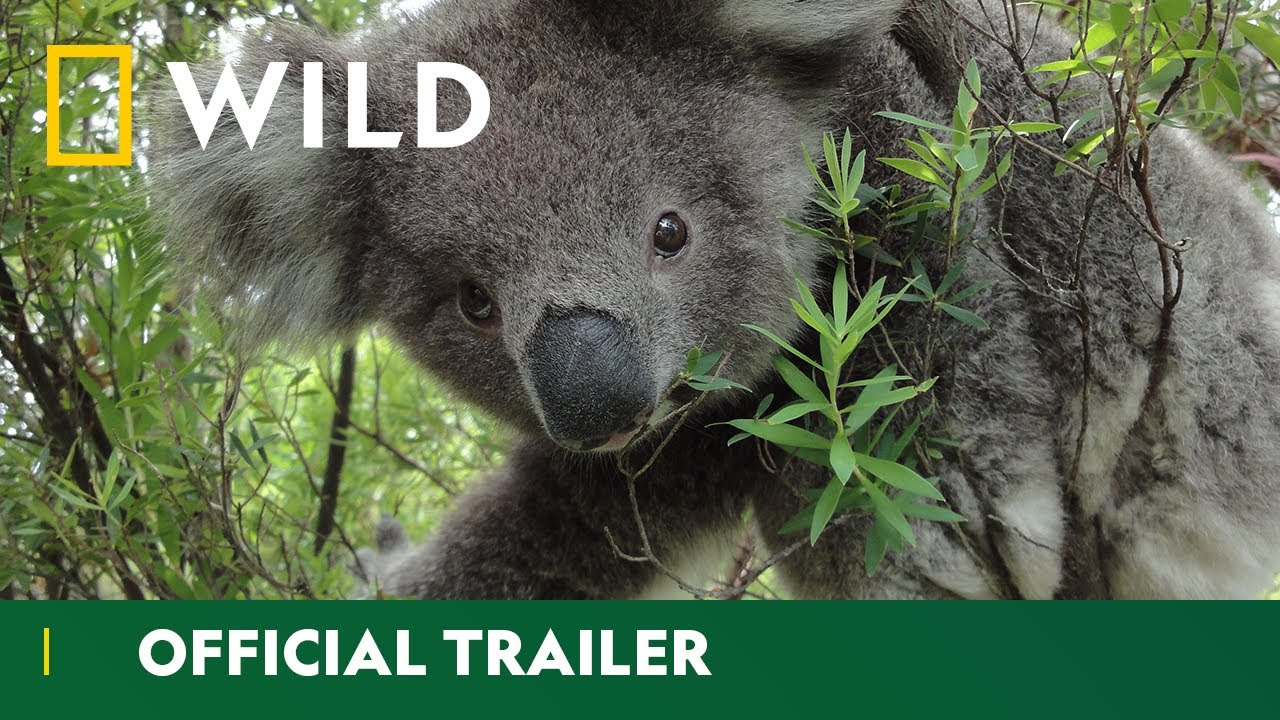 Download The Australian Outback | Wild Down Under - Official Trailer | National Geographic Wild UK