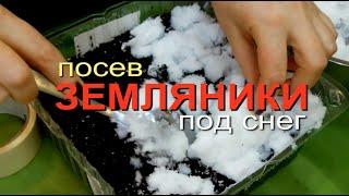 Посев Мелкоплодной Земляники из Семян 2020. Советы от Зеленого Огорода