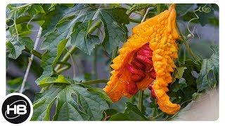 ФРУКТЫ. 10 самых необычных фруктов. #2...